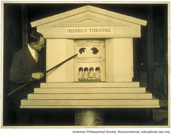 """Mendel's Theatre"" showing inheritance of hair color, demonstrated by Leon Fradley Whitney"