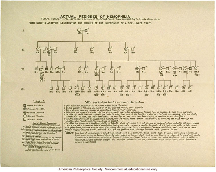 Hemophilia pedigree by Dr. Bess Lloyd