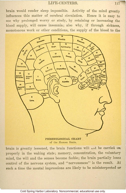 Phrenological Chart Of The Human Brain