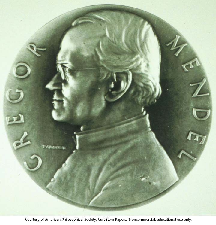 gregor mendel achievements This essay is the second chapter of orel's 1996 biography, gregor mendel: the first geneticist, published by and available from oxford university press.