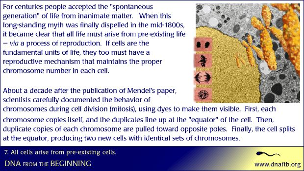 All cells arise from pre-existing cells.