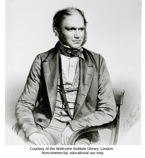 Gallery 12: Charles Darwin portrait drawing
