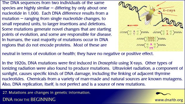 Concept 27: Mutations are changes in genetic information.